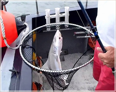 shark fishing trip donegal ireland